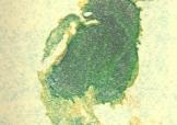 ashen-print-KS